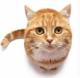 Recompense pentru pisici